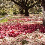 Experience What's New at Brookgreen Gardens!