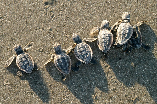 Celebrate sea turtles while on your vacation in Myrtle Beach at Plantation Resort!