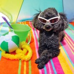 Your Pets Deserve a Vacation Too!