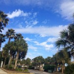 Why We Love Our Palmettos at Plantation Resort