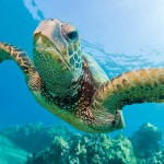 Celebrate Sea Turtles for World Turtle Day