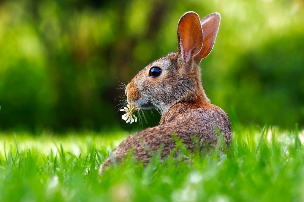 Easter Bunny - - Celebrate with these spring events while on Vacation at Plantation Resort in Myrtle Beach!