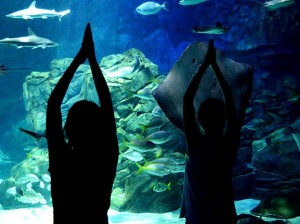 Celebrate your Myrtle Beach vacation at Ripley's Aquarium while at Plantation Resort!