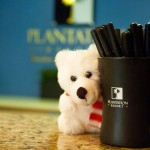 Plantation Resort Is Now on Pinterest and Instagram